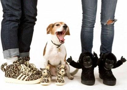 Adidas Perros Adidas Perros Para Ropa Ropa Para Para Ropa Perros 86wAA5xzSq